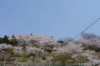 190407_katsumuna.jpg