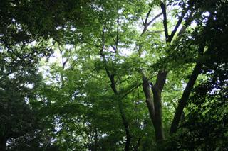 green10073.jpg